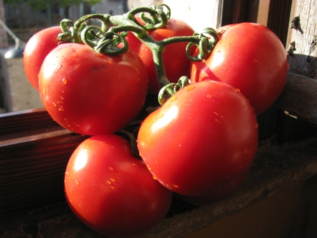 Really Nice Tomatoes